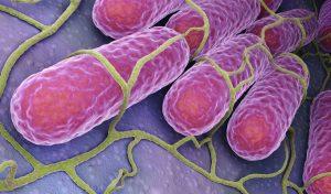 bacteria causing acne